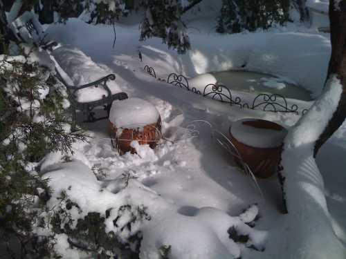 Февраль: работы на садовом участке в феврале