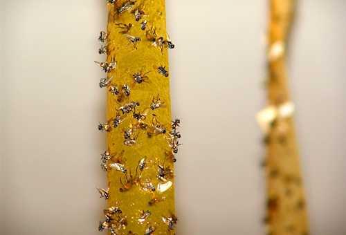 К чему снится рой пчёл или мух: толкование снов