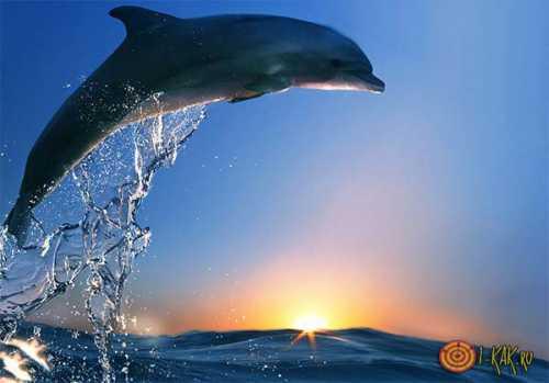 К чему снятся дельфины, толкование сна про стаю