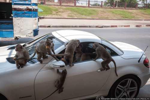 Заметки обезьяны