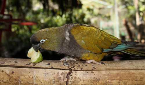 Птичий парк Цапари, Запари