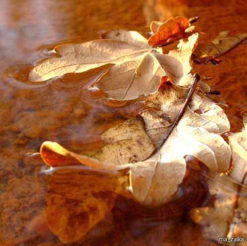 Осень в Старом Свете: ТОП
