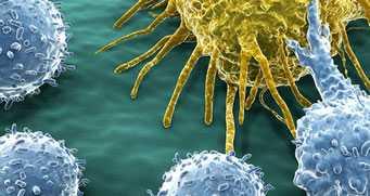 Иммунитет человека способен сам победить рак